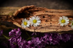 Ayurveda works in harmony with nature